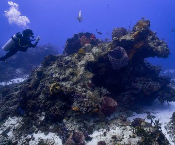 Cozumel Coral Reef Damage Update