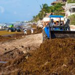 How is the seaweed in Riviera Maya? A Sargassum Update From Cozumel