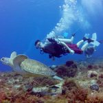 Scuba Diving In Cozumel Everything You Need To Know