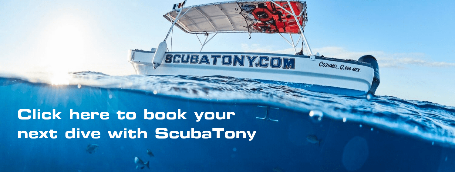 Book your next dive with ScubaTony today Cozumel scuba diving