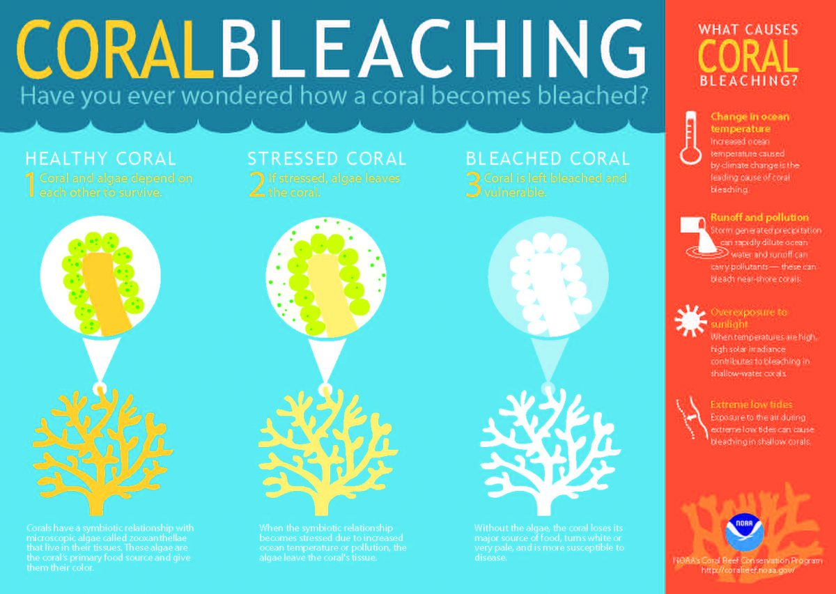 Coral Bleaching info graph