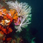 7 Underwater Photography Tips to Help You Improve Your Photography