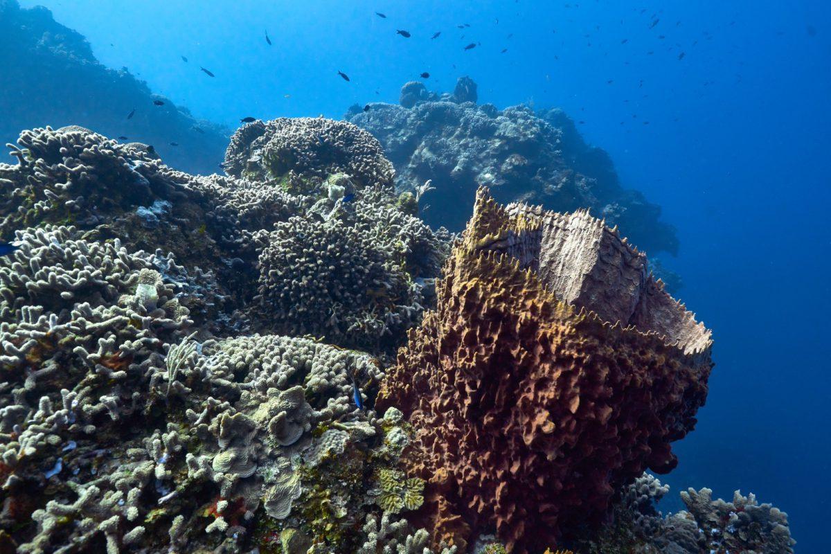 Cozumel Marine Park Under New Management