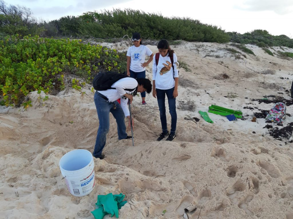 Carlos Ricardo uses a tool to track the outline of a Green Sea Turtles nest. This way they can carefully locate the egg chamber.