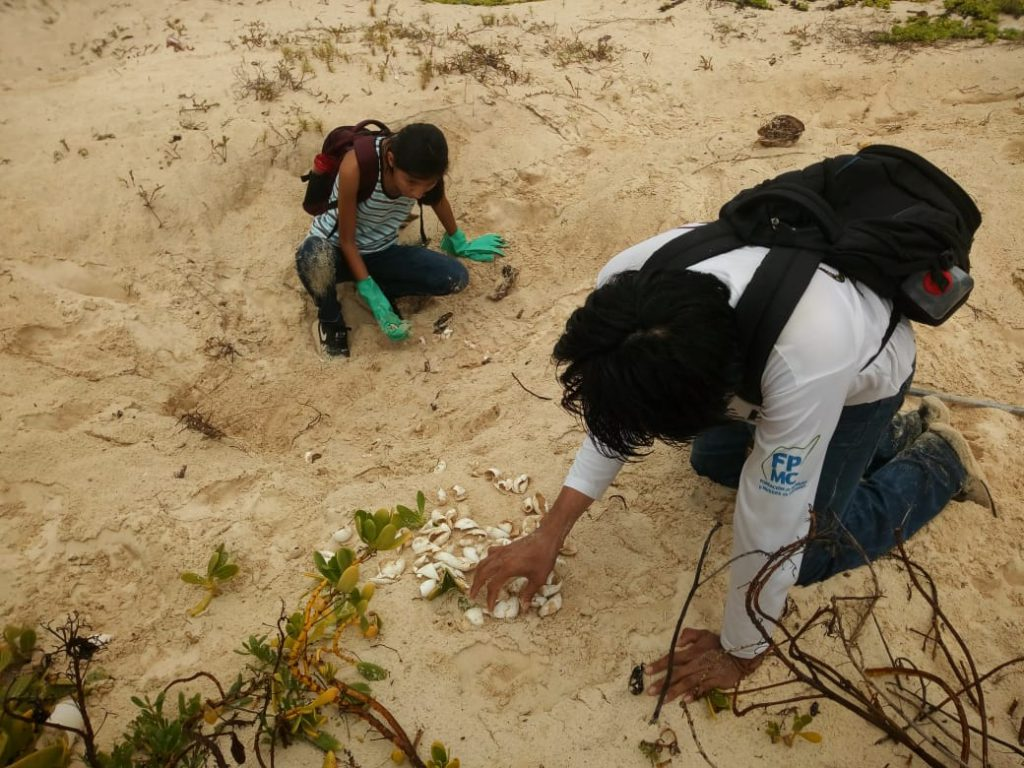 Carlos Ricardo and a volunteer count the egg shells from a recently hatched nest. They also take note of the unfertilized or spoiled eggs and any deceased turtles.