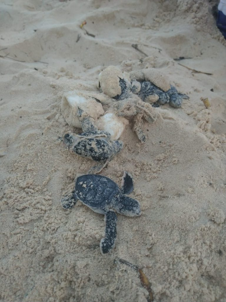 Empty egg shells and green sea turtles that didn't survive.